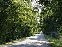 Vana-Vigala tammede allee (September 2015).JPG