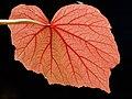 Vascular (8150173722).jpg