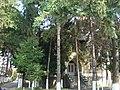 Vila Rozelor - Curtea de Arges (8).JPG