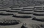 Vineyards - Yaiza - 04.jpg