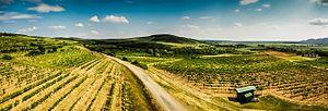 Tokaj wine region - Slovakian Tokaj wine region.