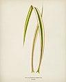 Vintage illustrations by Benjamin Fawcett for Shirley Hibberd digitally enhanced by rawpixel 8.jpg