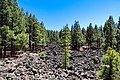 Volcanic rocks in a pine forest near Chinyero volcano on Tenerife, Spain (48225236207).jpg