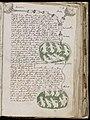 Voynich Manuscript (141).jpg