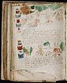 Voynich Manuscript (182).jpg