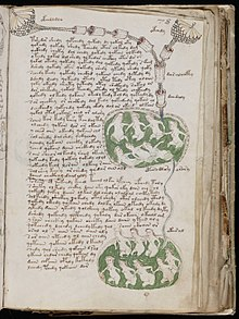 manuscrit de voynich