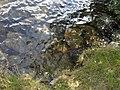 Vylet k Cernemu jezeru Sumava - 9.srpna 2010 230.JPG