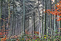 Waldnebel nov2 f1024 hdr.jpg