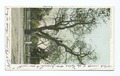 Washington Elm, Cambridge, Mass (NYPL b12647398-66502).tiff