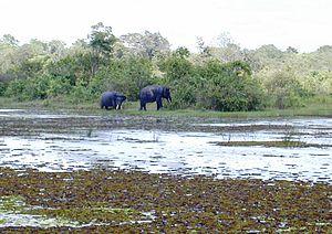 Way Kambas National Park - Elephants in the Way Kambas Conservation Centre