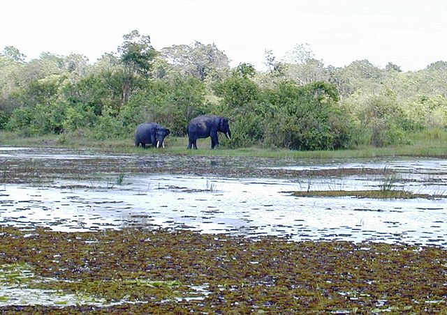 Nationalpark Way Kambas