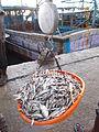 Weighing fish baskets in Rameswar fishing port..JPG