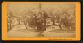 White Sulphur Springs, Napa Co. Cal, by J. G. Brayton 6.png