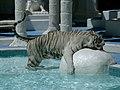 White Tiger in Las Vegas 241 (2610638724).jpg