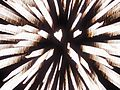 White firework exploding brightly with high contrast.JPG