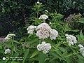 White flowerssss.jpg
