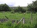 Willmount Townland - geograph.org.uk - 1404799.jpg