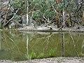 Wilpena Pound, Flinders Range - panoramio - Frans-Banja Mulder.jpg