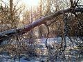 Winter - panoramio - Ainars Brūvelis (4).jpg