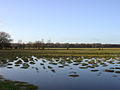 Winter flooding on Balmer Lawn, New Forest - geograph.org.uk - 24727.jpg