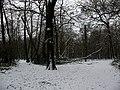 Winter in Elmstead Woods (5) - geograph.org.uk - 1655680.jpg