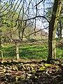 Woodland edge, top of Kidnalls - April 2012 - panoramio.jpg
