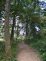 Woodland near Shenley (32926574124).jpg