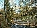 Woodland path near Coxley - geograph.org.uk - 132420.jpg