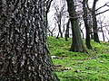 Woodlands in Dyffryn. - geograph.org.uk - 479618.jpg