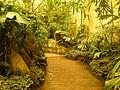 Yağmur Ormanı 27.jpg