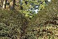Yaseakimotocho, Sakyo Ward, Kyoto, Kyoto Prefecture 601-1252, Japan - panoramio (2).jpg