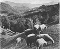 Zasavje 1935.jpg