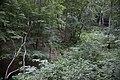 """Zicht op de bron van de beek """"De Oorsprong"""", in het bos met rechts de Kabouterboom - Unknown - 20537004 - RCE.jpg"""