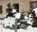 Zima 2010 01 22 1079.JPG