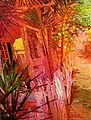 """""""Key West Sidewalk At Dusk"""".jpg"""