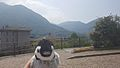 'Mr Penguin' overlooking the hills near Esino Lario, Wikimania 2016.jpg