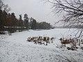 «Пляхова», Деснянський район, озеро Лісне.jpg