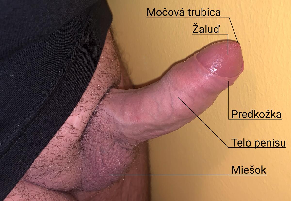 penis crește pula)