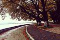 Φθινοπωρο στα Ιωαννινα.jpg