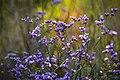 Бузький Гард. Квіти у долині р. Арбузинка.jpg