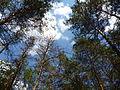 В лесу под Харьковом.JPG