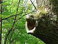 Голосіївський ліс IMG 8674.jpg