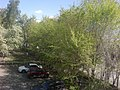 Деревья у дома.jpg