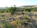 Заброшенный дачный посёлок - panoramio (56).jpg