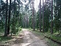 Лесная дорога le chemin de forêt meža ceļš - panoramio - Aleksandrs Timofejev… (6).jpg