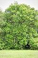 Непран Вячеслав, Айдарська тераса-2, Заказник лісовий, 44-231-5012, Новоайдарський район (3).jpg