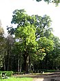 Один из самых старых дубов в парке. - panoramio.jpg