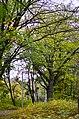 П'ятничанський парк у Вінниці. Фото 3.jpg