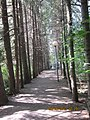 "Природный заповедник - ""KIVACH"" Кивач, Карелия-2012 - panoramio (5).jpg"