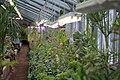 """Растения на экскурсии """"Тропики"""".jpg"""